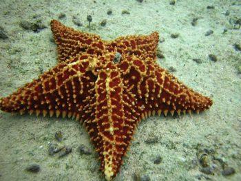 Reef Life Cozumel