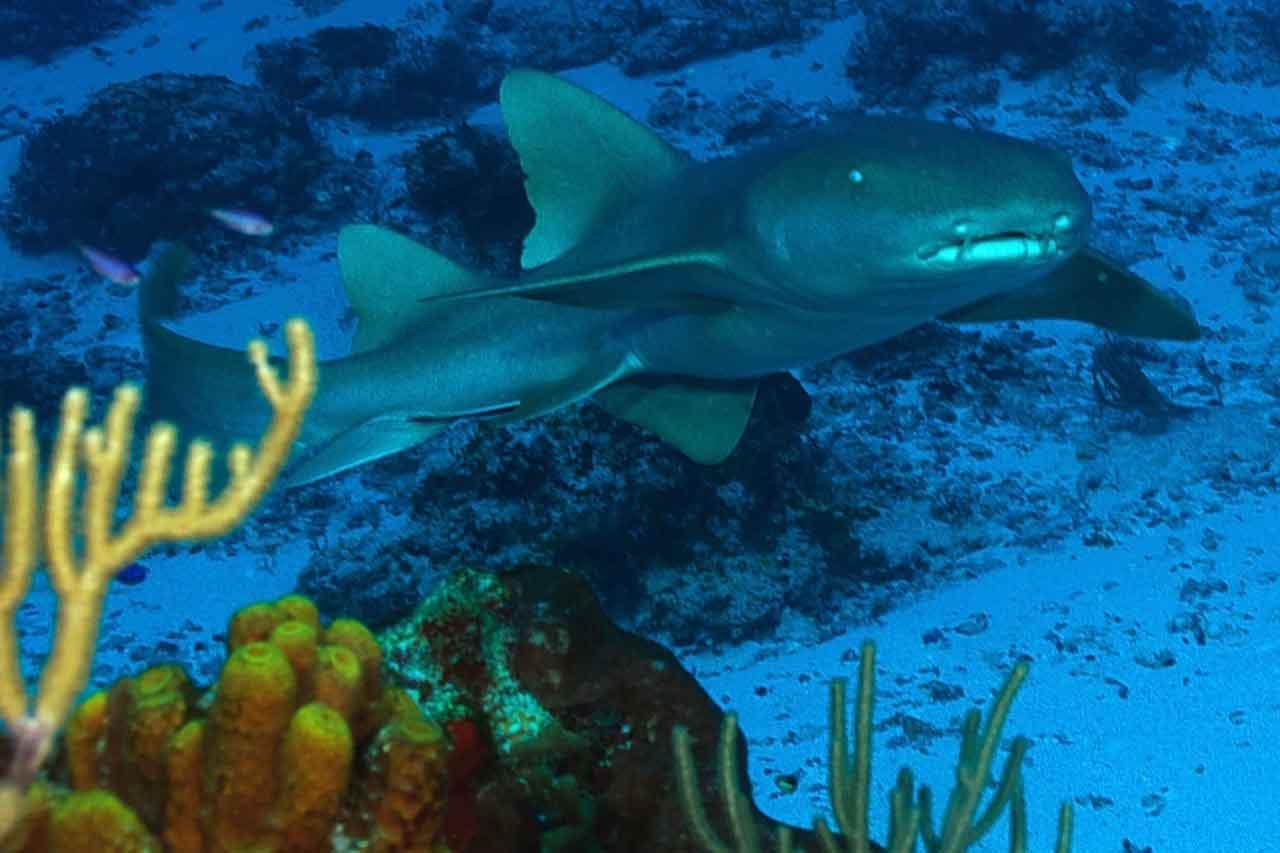 Reef Life Cozumel Tourist Activities